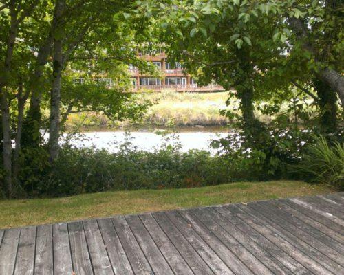 creek-view